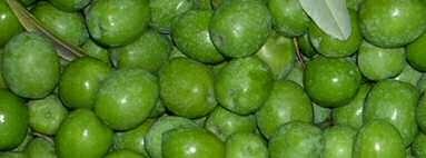 olive nocellara del belice prima della molitura
